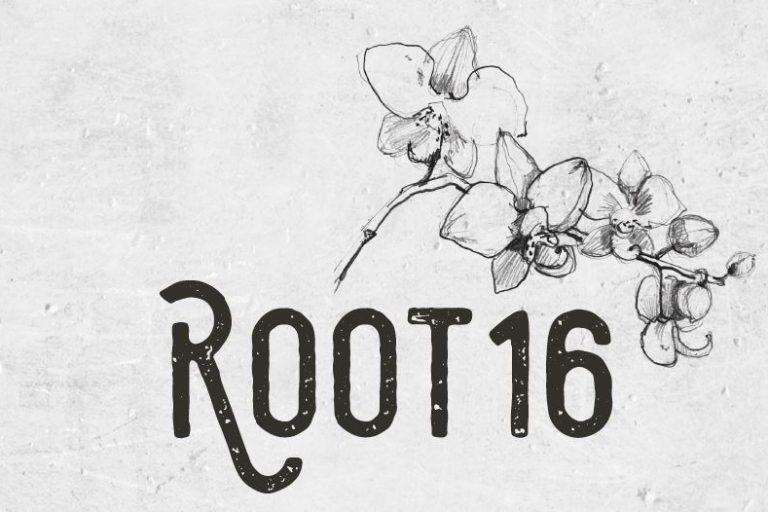 Root 16 van Leerdam Orchids - Pull Position
