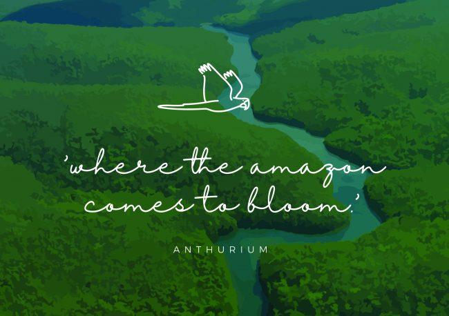 Amazone Plants pay-off