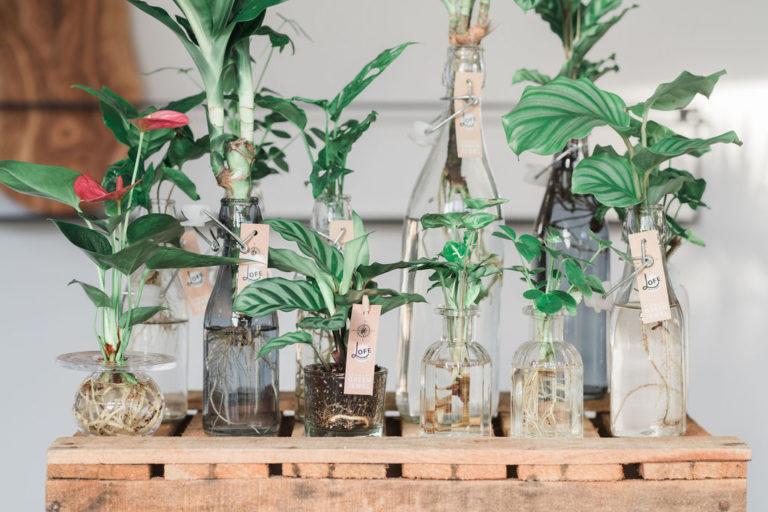 Een compositie van de producten van LOFE, plantjes met wortels in het water.